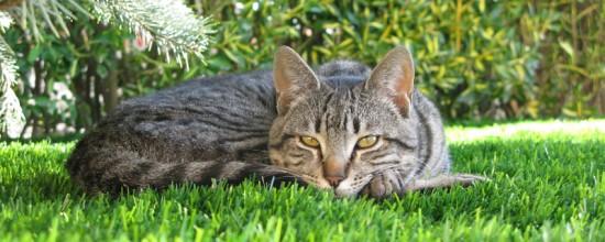 Comprar césped artificial: jardín a prueba de mascotas